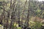 pastorendiek-naturschutzgebiet-4974