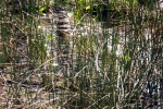 pastorendiek-naturschutzgebiet-4975