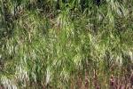 zittergrass-5180