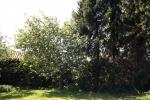 apfelbaum-5176