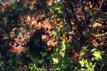 blaetter-gruen-braun-rot-5094