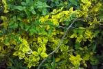 blaetter-gruen-gelb-5079
