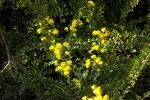 blueten-gelb-5067