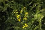blueten-gelb-5068