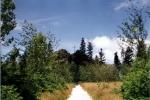 bruchhauser-steine-weg