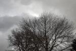 9106-kahler-baum-dunkle-wolken