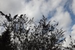 9110-abgeblueher-kahler-flieder-vor-wolkigem-himmel