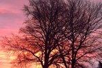 9142-sonnenaufgang-rosa-blau-kahler-baum