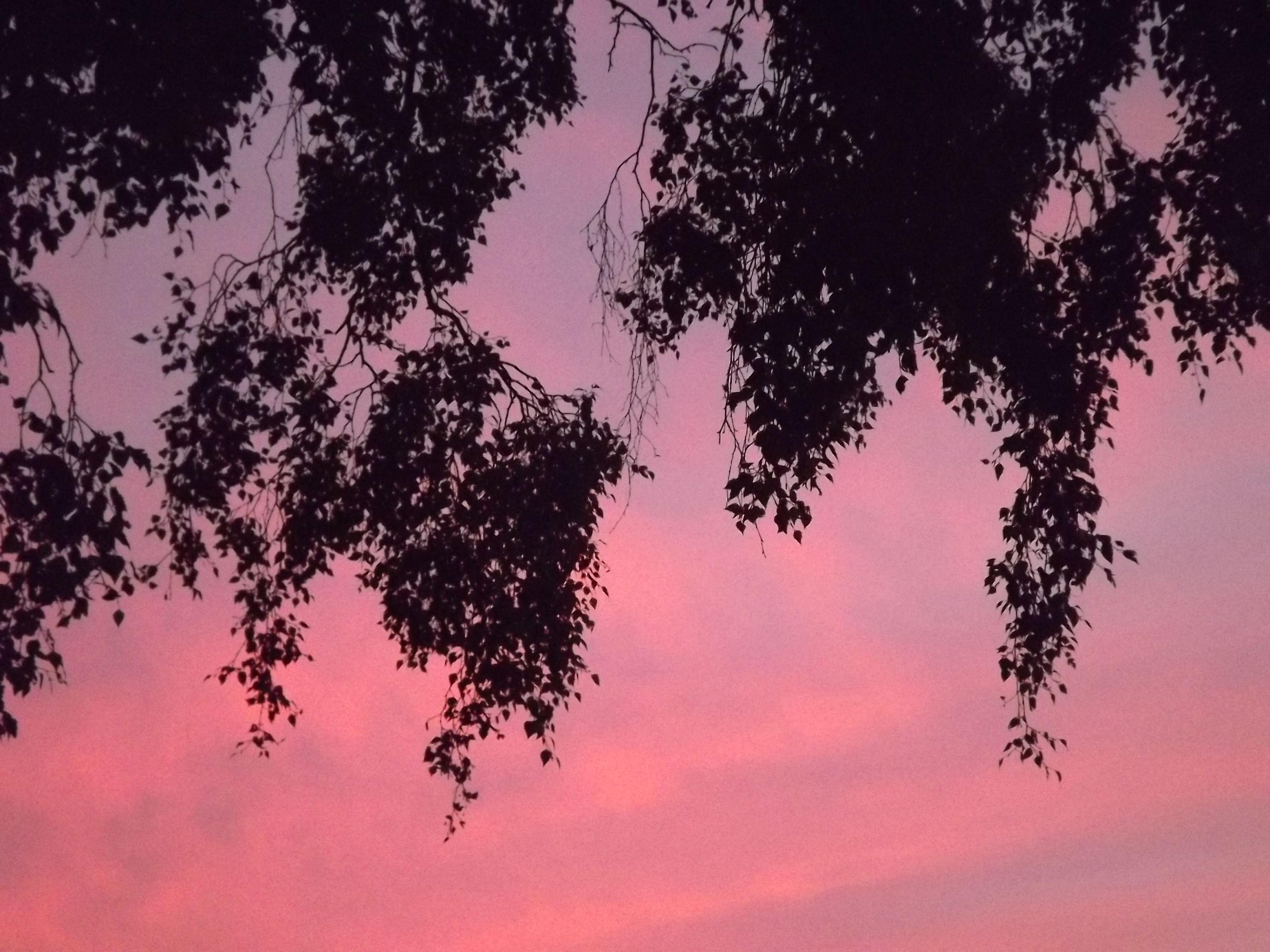 6274-himmel-wolken-rosa-blau-silhouette