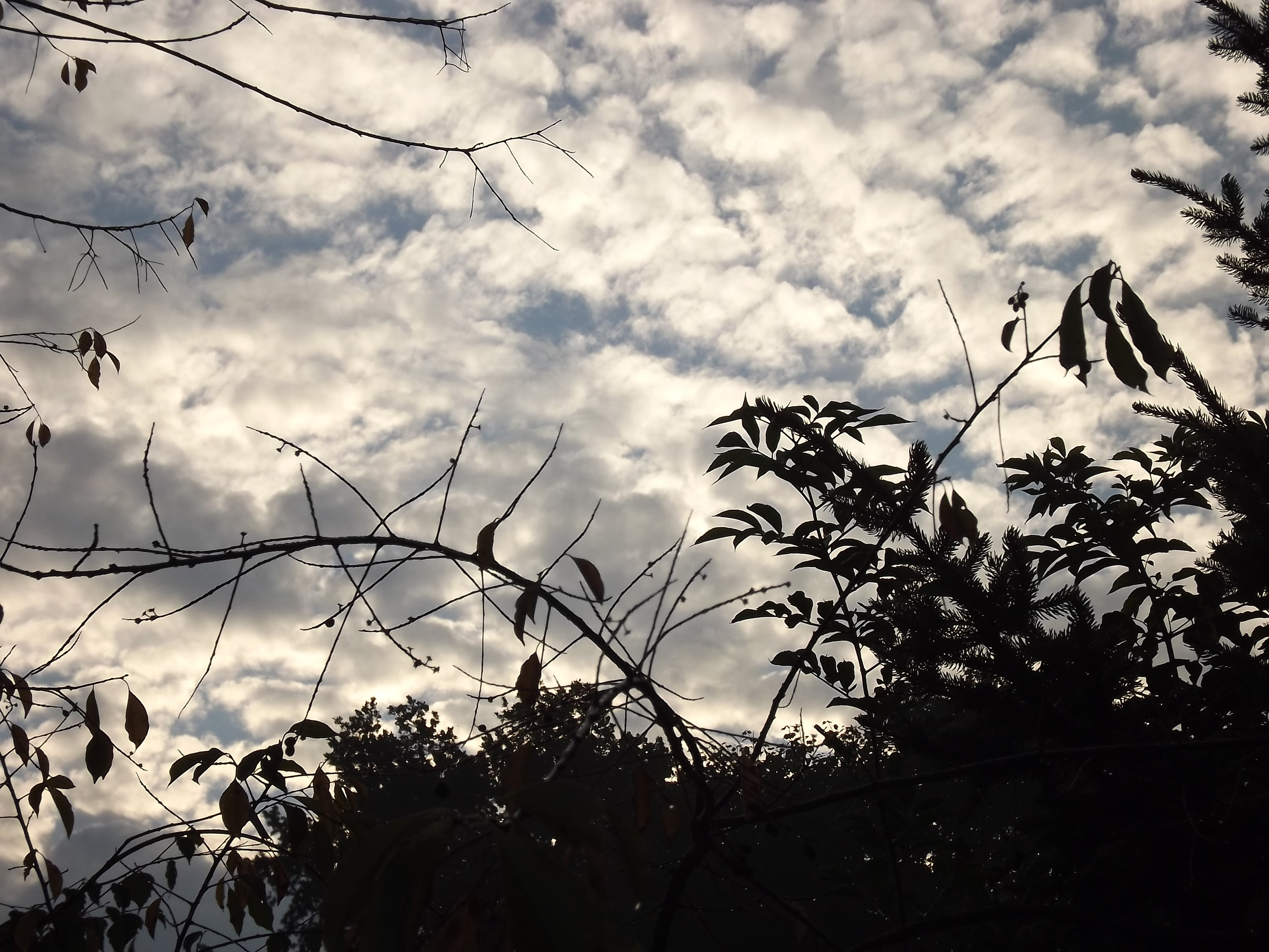 6485-wolke-himmel-blau-silhouette