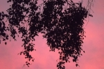 6275-himmel-wolken-rosa-blau-silhouette