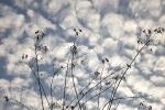 6482-wolke-himmel-blau-silhouette