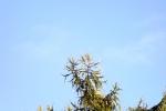 6498-lerche-spitze-himmel-blau