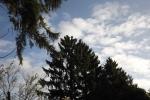 6506-himmel-blau-wolken-tannen