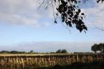 6508-feld-geerntet-himmel-wolken