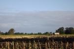 6514-feld-geerntet-himmel-wolken-trecker