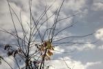 6524-himmel-blau-wolken-silhouette