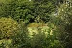 6309-gruene-pflanzen