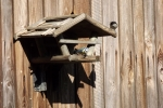 6375-vogelhaus-voegel-kohlmeise