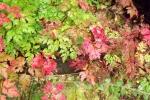 6475-blaetter-rot-gelb-gruen-verlauf