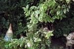 6500-gartenzwerge-busch