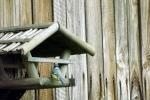 meise-am-vogelhaus.jpg