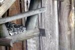 vogelhaus-ganz-nah.jpg