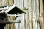 vogelhaus-mit-meise.jpg