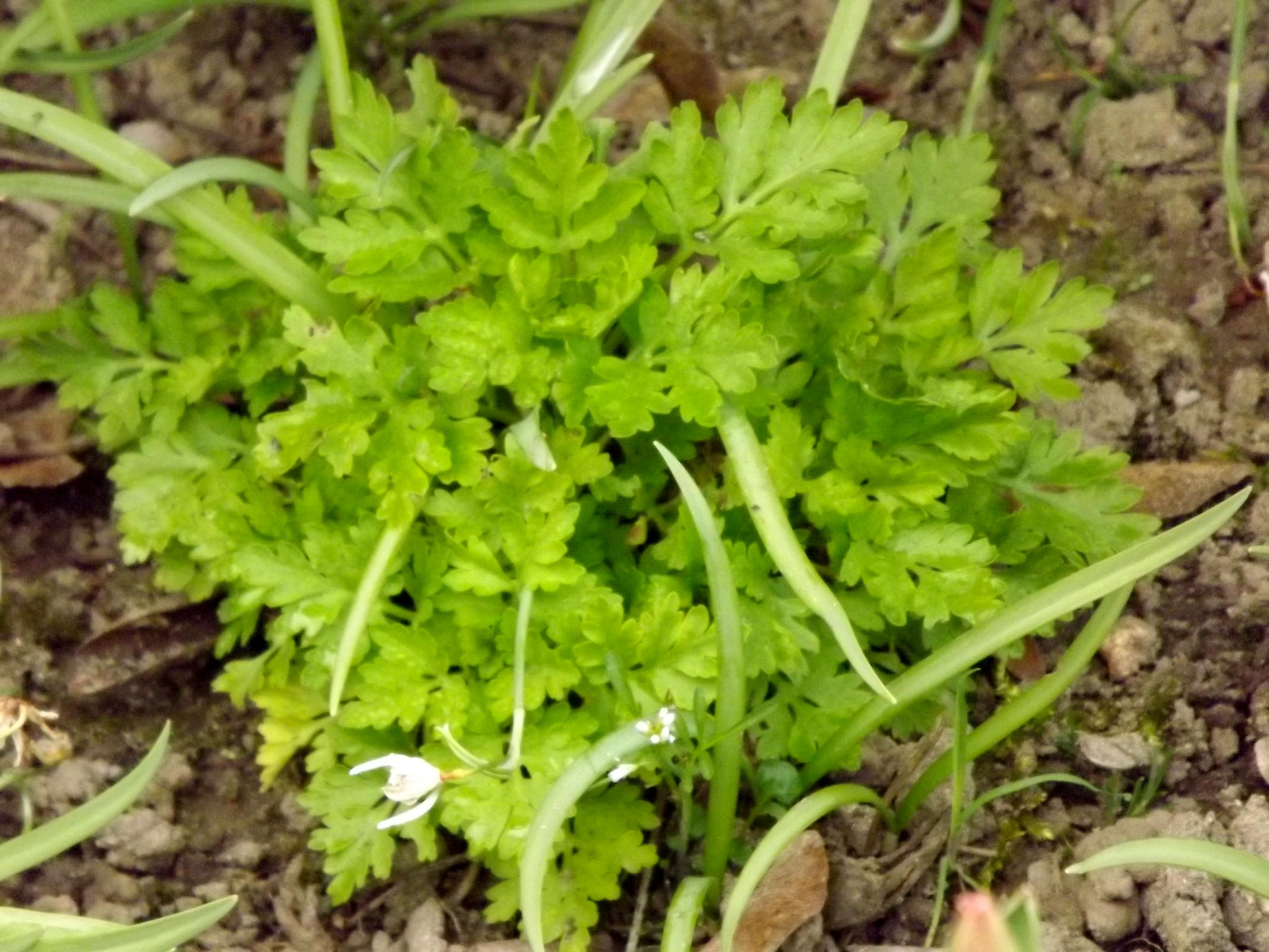 5897-gruen-pflanze