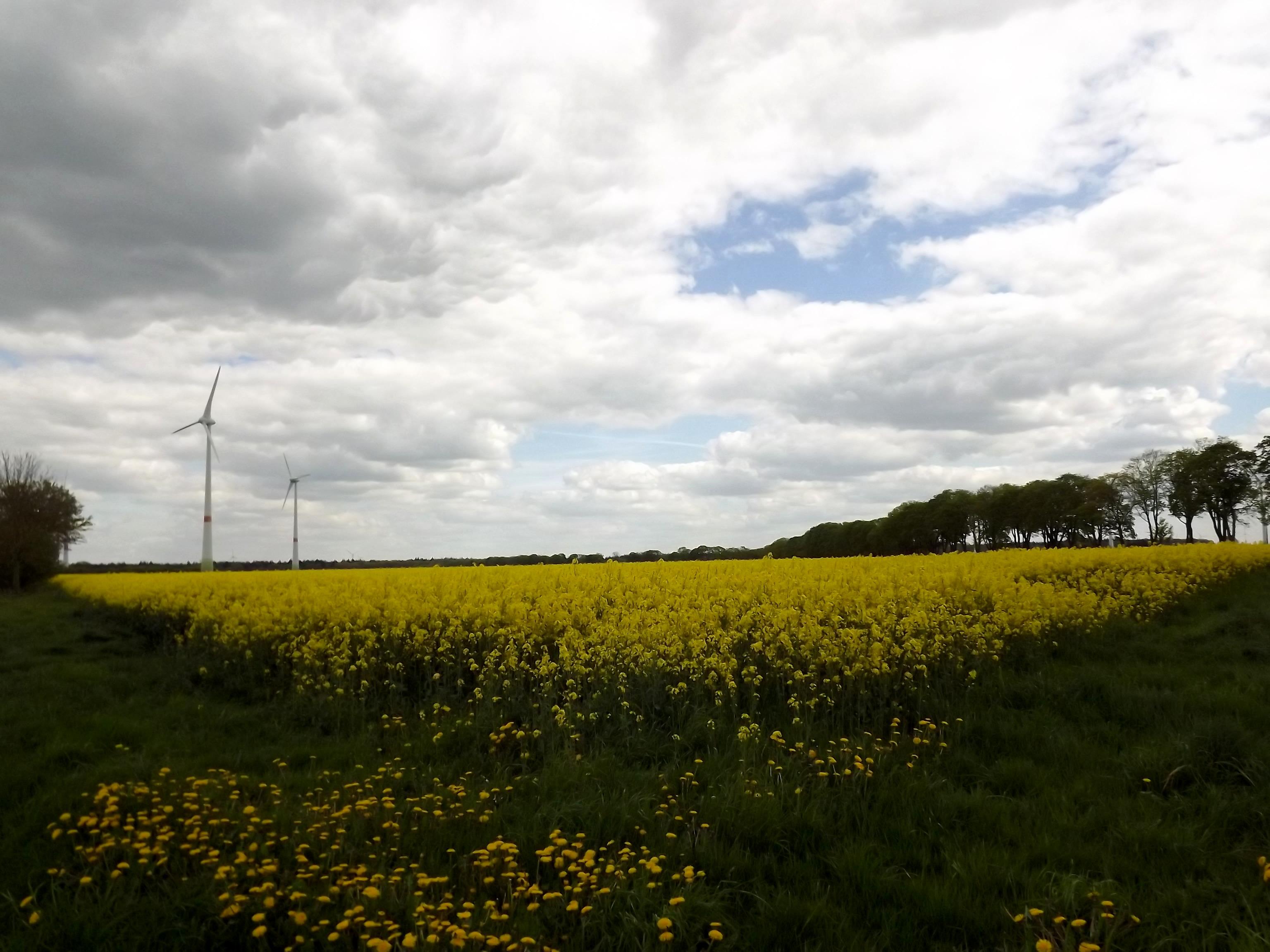 6007-gelbes-feld-wolken-sonnenschein