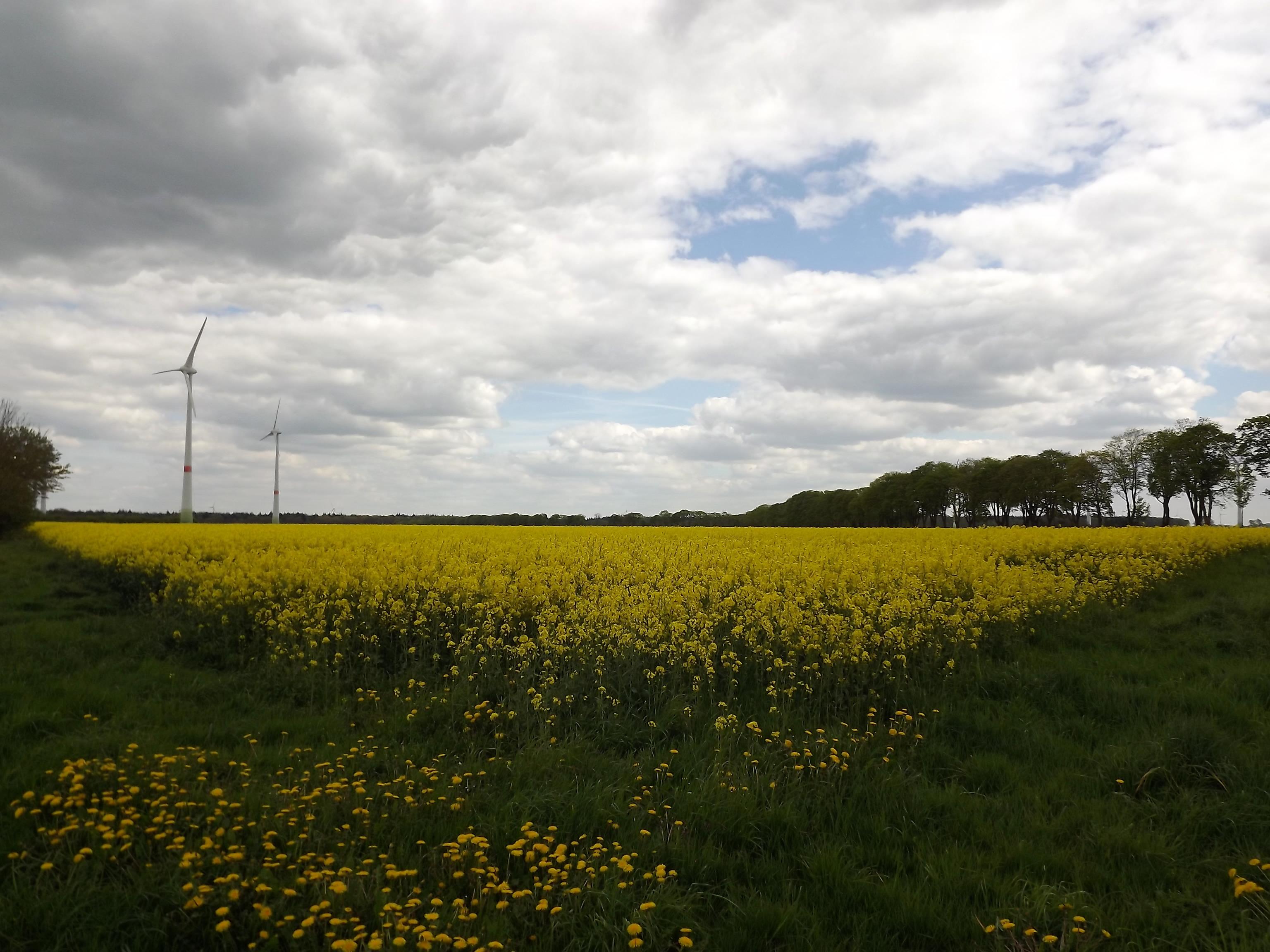 6008-gelbes-feld-wolken-sonnenschein