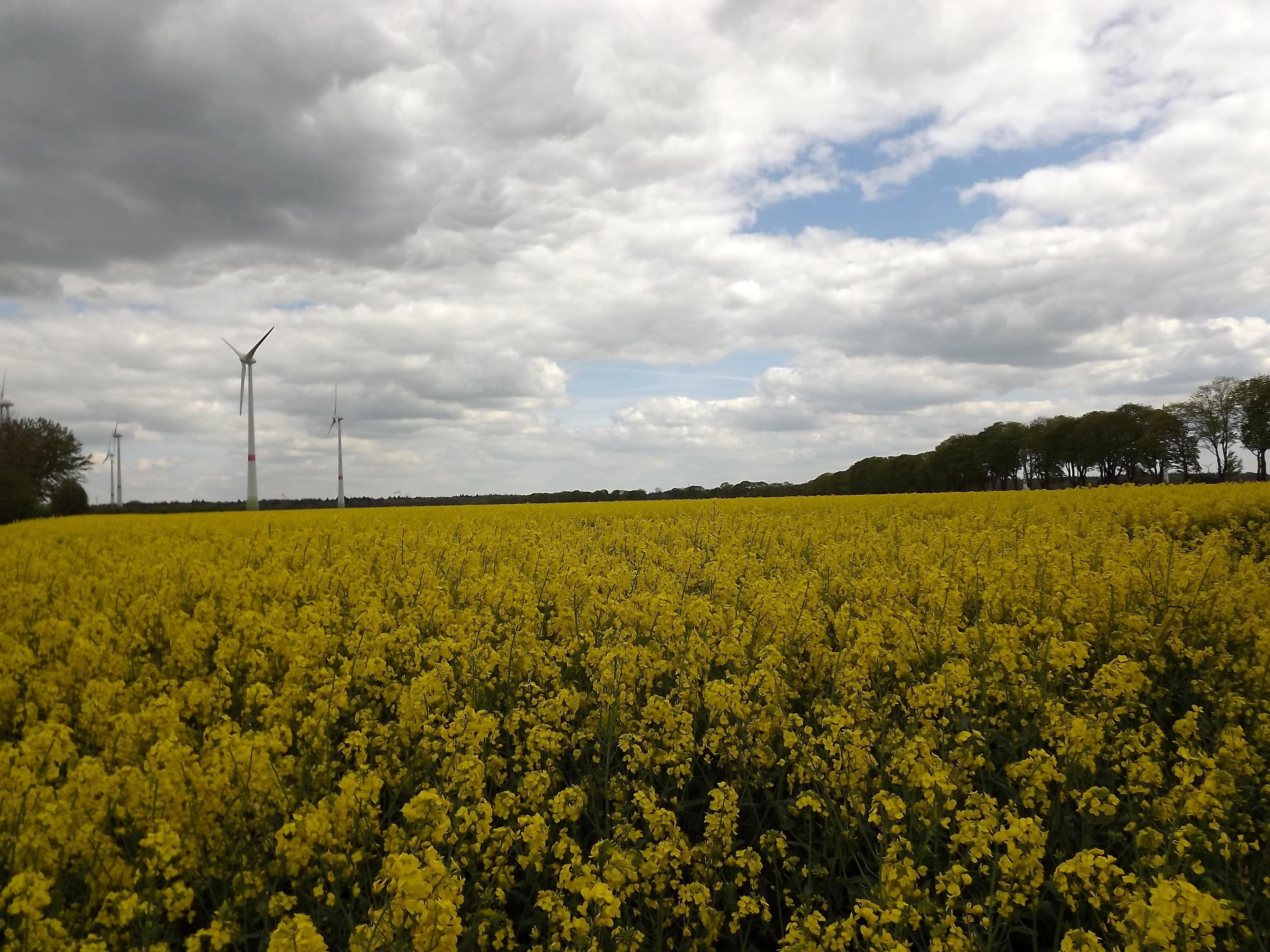 6011-gelbes-feld-wolken-sonnenschein