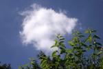6180-traubenkirsche-wolke