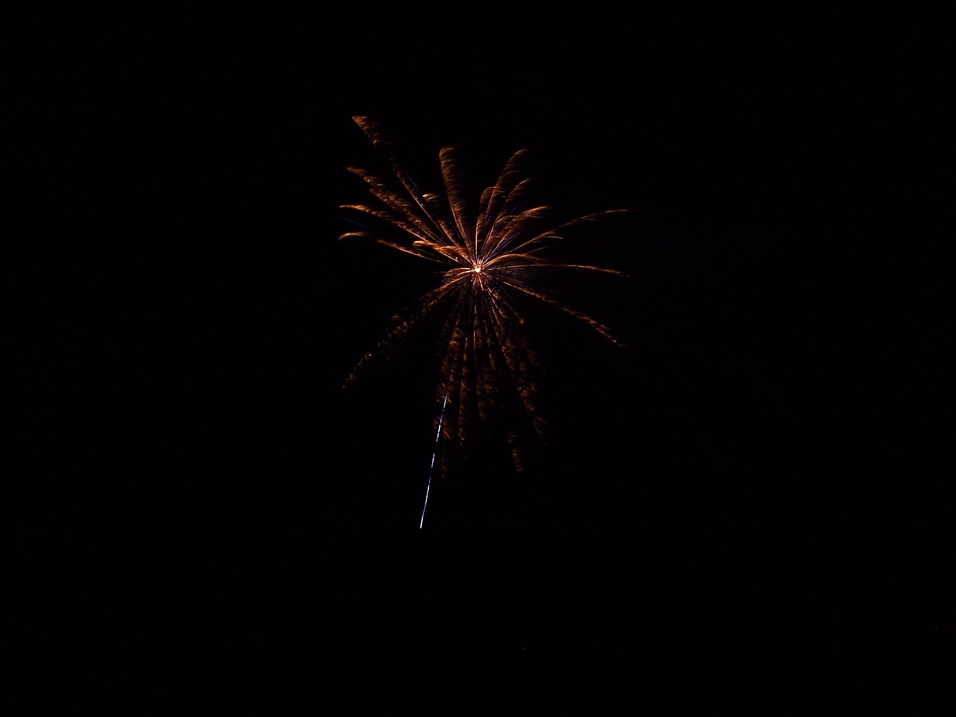 feuerwerk-blume-4533