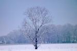 baum-auf-feld-winter-4694