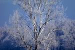 baum-auf-feld-winter-4715