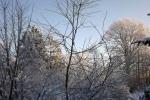 frostig-morgen-gestrueb-4722