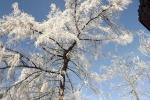 frostig-wintermaerchen-baum-4729