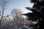 frostiger-morgen-4728