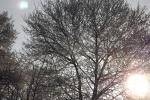 frostiger-morgen-4745