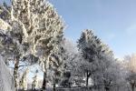 verschneite-baeume-sonnenschein-4742