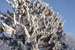 verschneite-baeume-sonnenschein-4743
