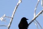 vogel-vereister-zweig-4734