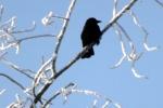 vogel-vereister-zweig-4735