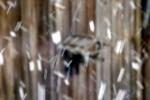 vogelhaus-schneetreiben-4636