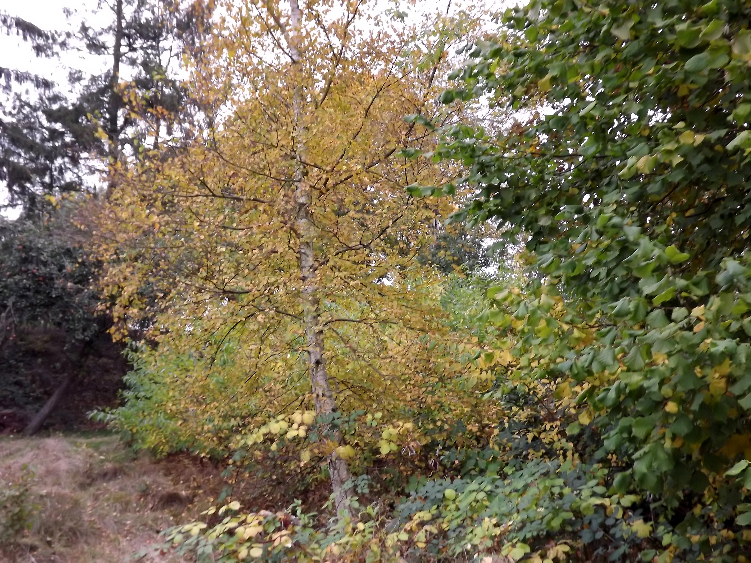5546-herbst-wald