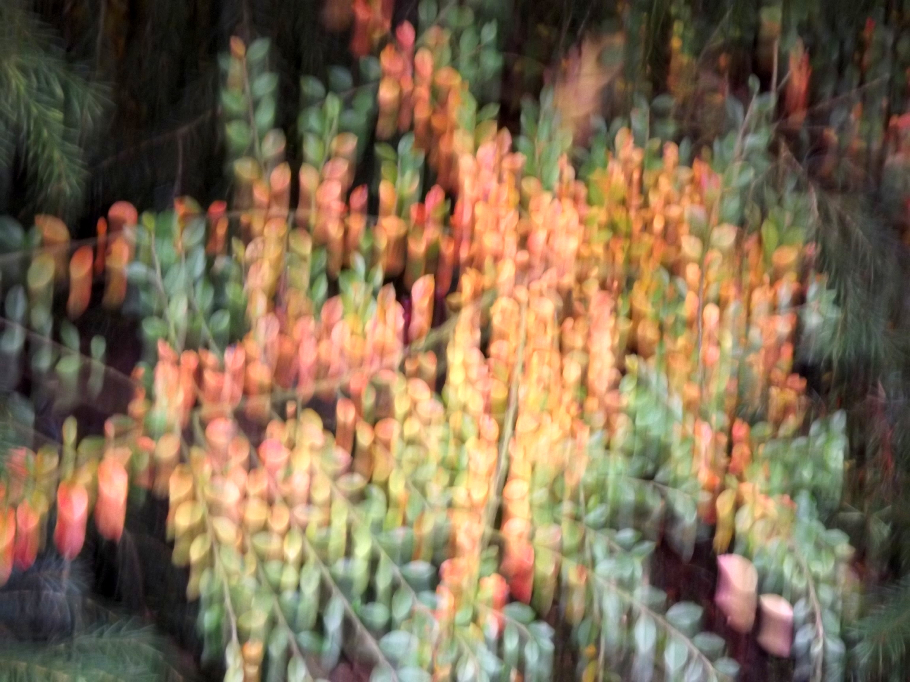 5554-abstrakt-blaetter-rot-gelb-gruen