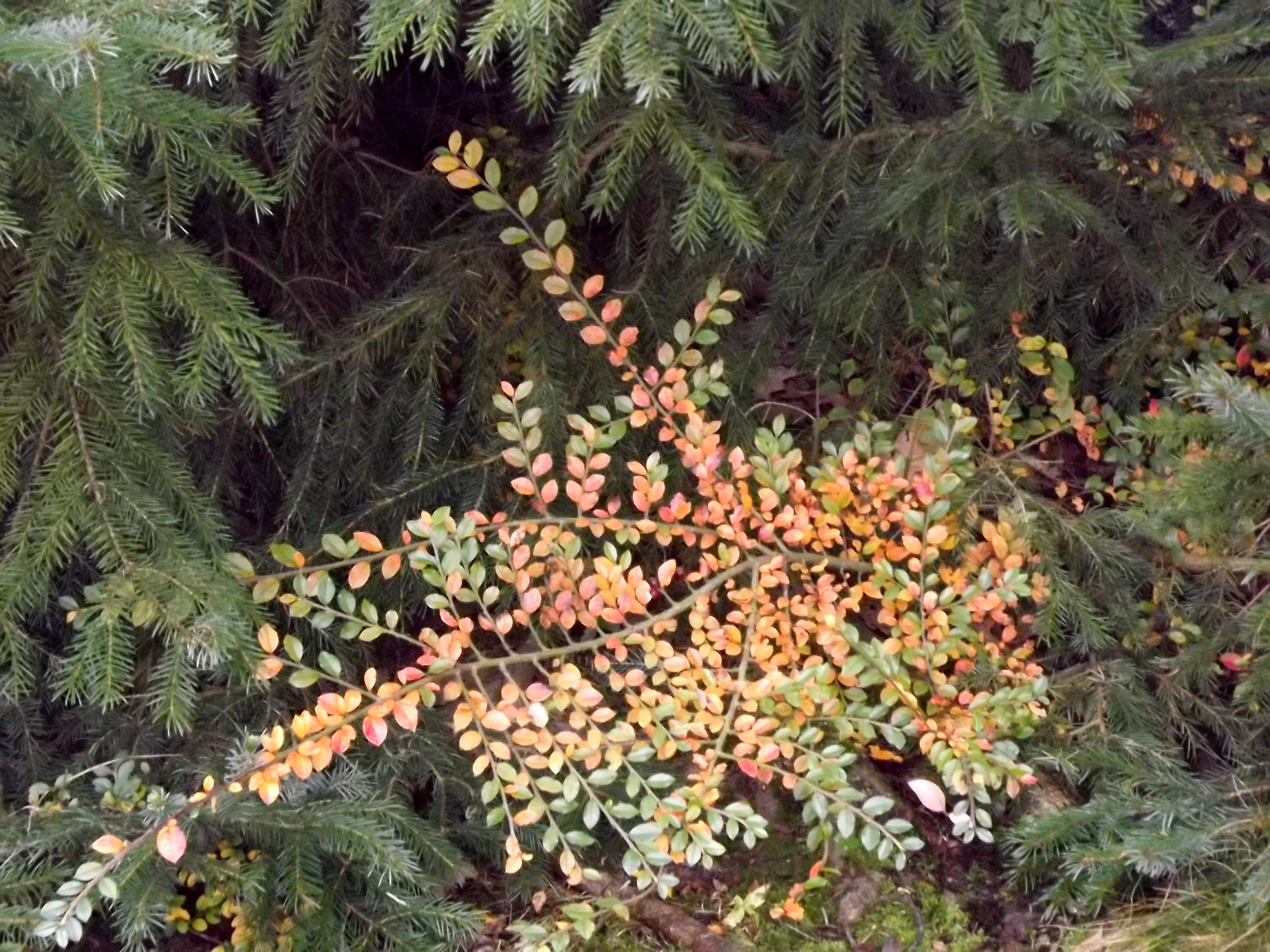 5596-gruen-gelb-rot-blaetter
