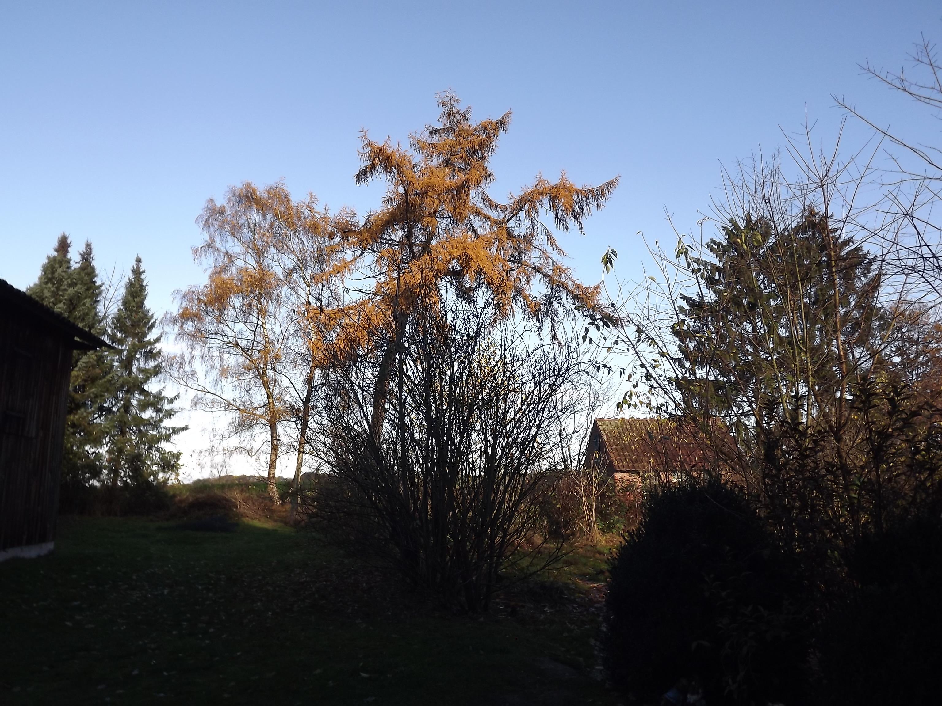 5630-goldener-herbst