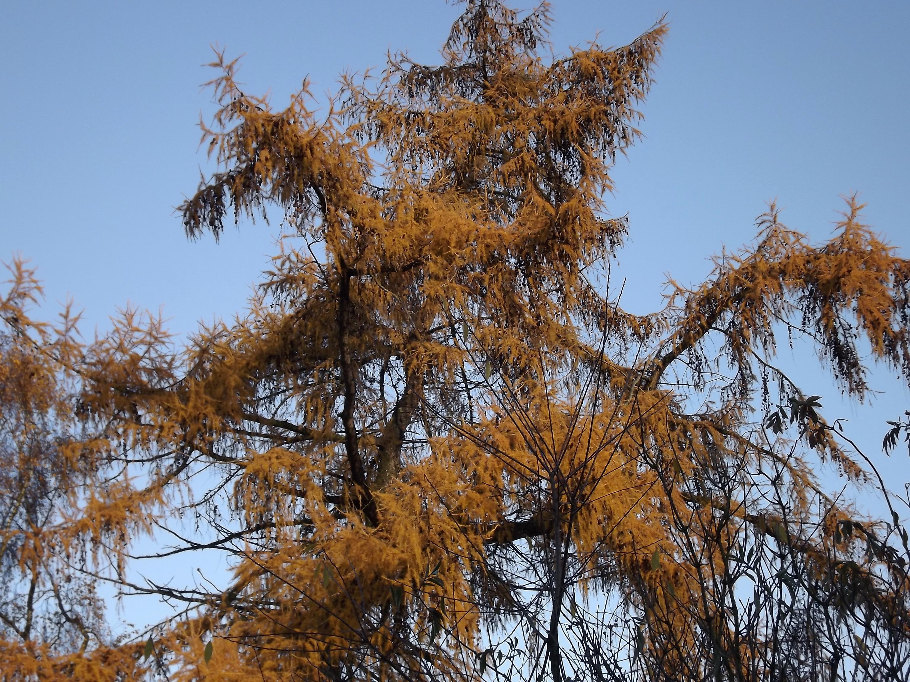 5631-goldener-herbst